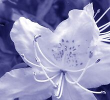 Floral Blue by sarnia2
