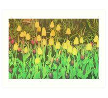Card: Tulips Art Print