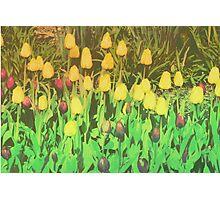 Card: Tulips Photographic Print