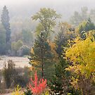 Fall Morning by Tracy Riddell