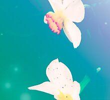 Ethereal Daffodils by Ashley Frechette