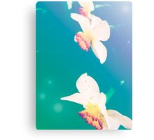 Ethereal Daffodils Canvas Print