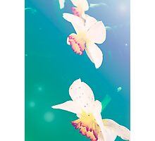 Ethereal Daffodils Photographic Print
