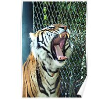 The Tiger Yawns Tonight Poster