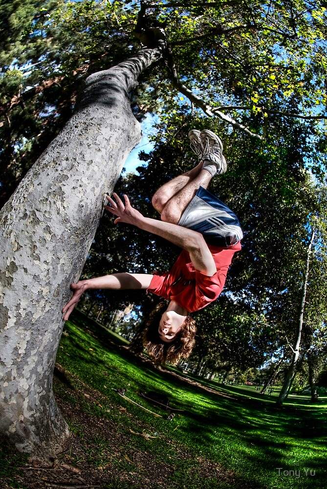 Tree Spin by Tony Yu