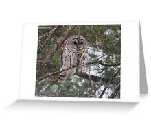 Barred Owl - A Little Wet Greeting Card