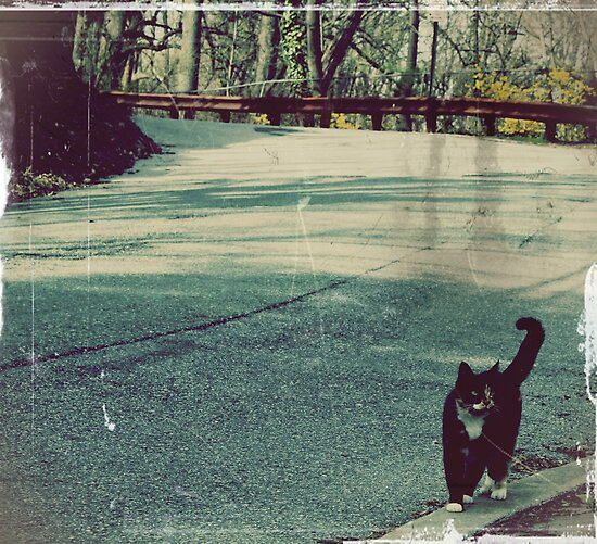 Cool cat in a small town... by meredith brown