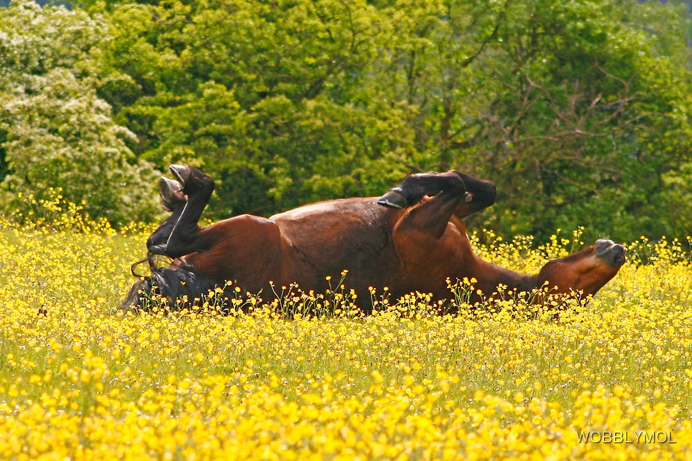 The Sun Worshipper by WOBBLYMOL