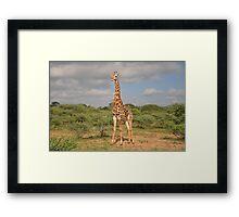 Giraffe on Safari Framed Print