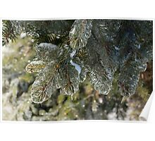 Mother Nature's Christmas Decorations - Pine Branches Poster