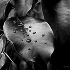 Rain Drop by Ashley Christine Valentin