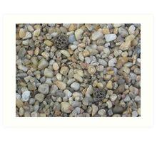 Pebbles in the Park (2) Art Print