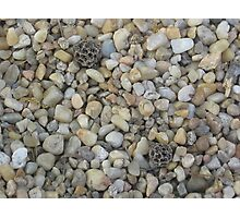 Pebbles in the Park (2) Photographic Print