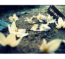 equally delicate - razors and blossoms Photographic Print