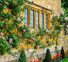Climbing Roses, Flowers & Architecture. by ScenicViewPics