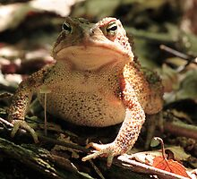 Tuscarora Toad by jimHphoto