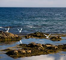Coastal Flight by Sue  Cullumber