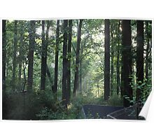 Misty Morning Rays - 10 Poster