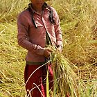 Girl of the Rice Harvest  by lgusem