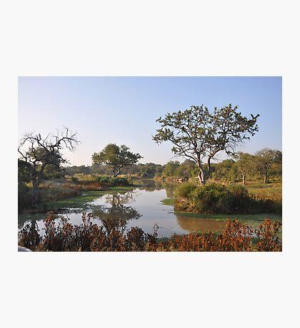 Safari Landscape Photographic Print