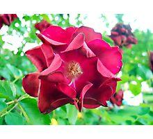My Precious Flower Photographic Print