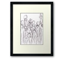 Drawing Day 2010 - Irises Framed Print