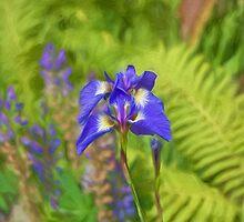 Wild Iris by KathleenRinker