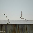 Two Seagulls | Center Moriches, New York  by © Sophie W. Smith