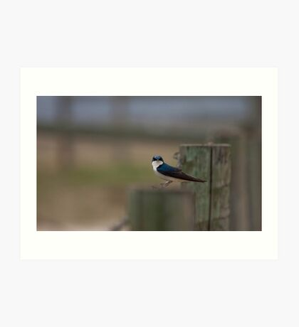 Swallow On a Wire Art Print