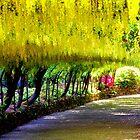 Laburnum  Arch Bodnant Gardens - 3  by Rayworsnop