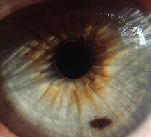 My Eye by Sandra Cockayne