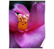 Pink Camellia's Heart Poster