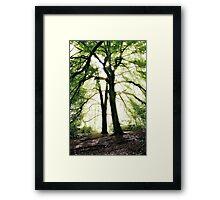 Sunlight through trees, Trentham Gardens, UK. Framed Print