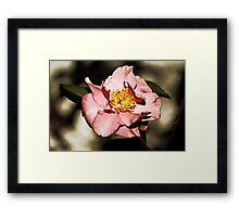 Not Just Another Pretty Camellia Framed Print
