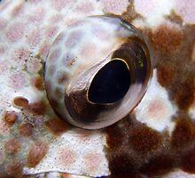 Cod Eye by Sean Elliott