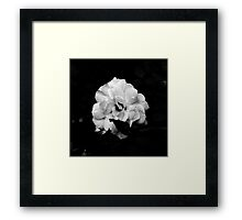 B&W Flower Photgraph Framed Print