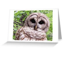Colors of Nature - Owl 001 - Who Me ? Greeting Card