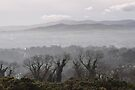 a foggy day in killiney, eire by gary roberts