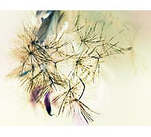 Whispers  In The Wind - Softly, Softly - Photographic Print