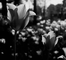 Flowers without colours by Igor Philipenko