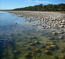 Lake Clifton thrombolites by Stacey Pritchard