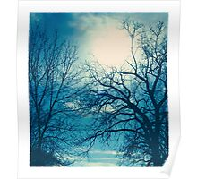 shining through the branches Poster