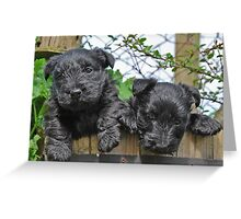double cute Greeting Card