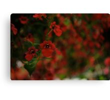 Red unfocused (macro)  Canvas Print