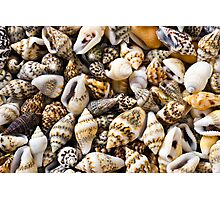 Seashells Photographic Print
