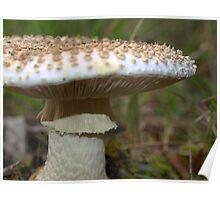 Fungi found in the Otway Ranges, Victoria, Australia Poster
