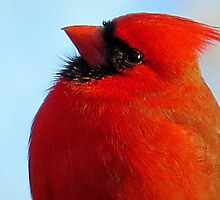 Red Cardinal Portrait by Jean Gregory  Evans