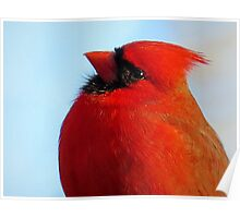 Red Cardinal Portrait Poster