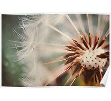 Dandelion Poster