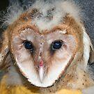 Rescued Baby Barn Owl by SKNickel